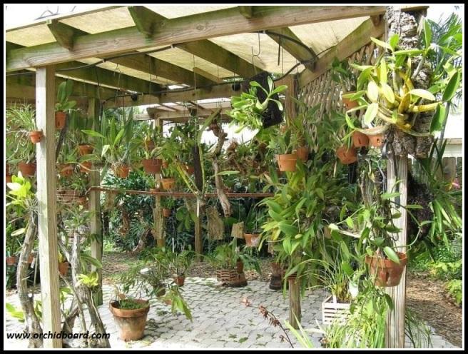 Orchidea all\'aperto   Orchidofili Italia