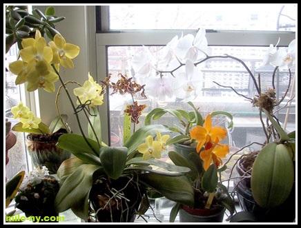 Quanta luce serve alle orchidee orchidofili italia